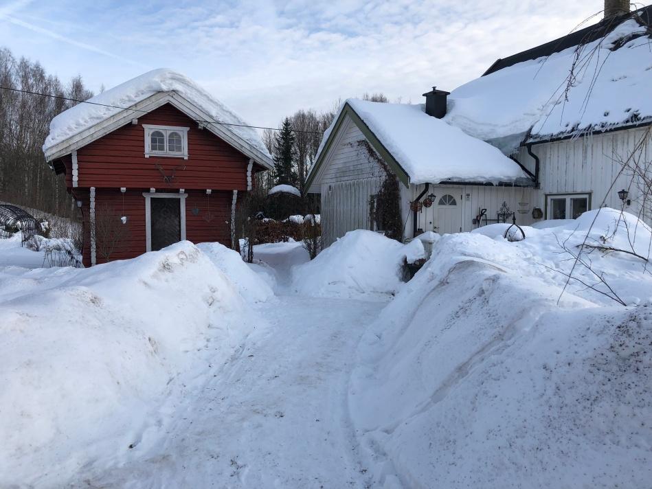 Gardening In Norway The Frozen Gardener